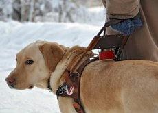 Perro guia en la nieve
