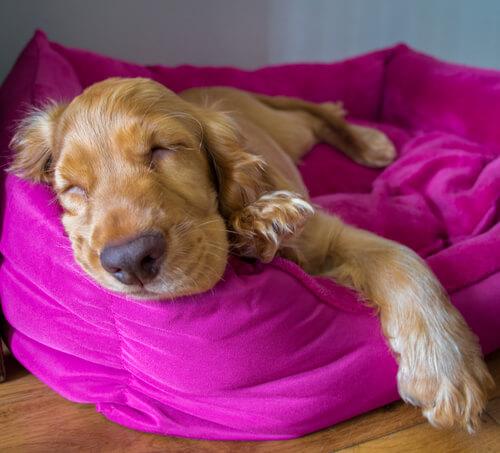 ¿Cómo son los sueños de los perros?