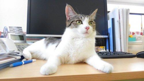Gato sobre una mesa de trabajo