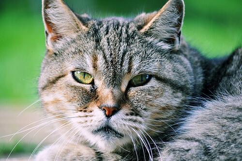 Si no te gustan los gatos es porque no los conoces