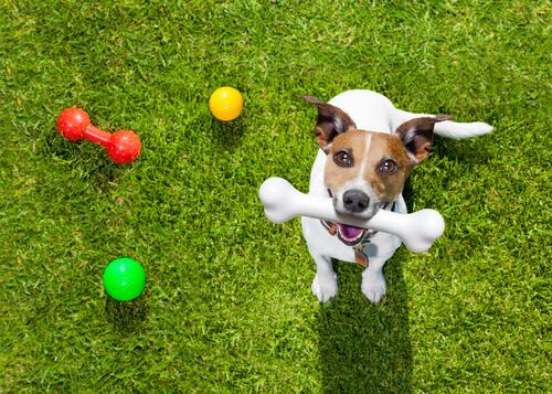 5 juegos para disfrutar con tu perro