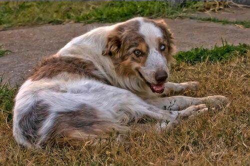¿Cómo se trata la artritis en un perro?