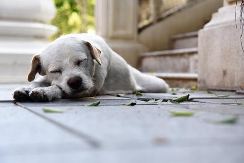 ¿Es cierto que los perros sueñan con sus dueños?