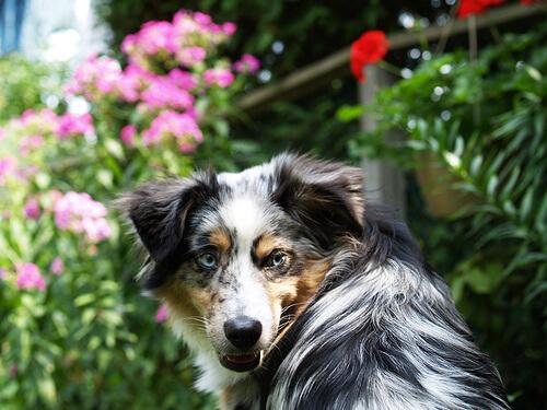 ¿Qué hacer ante las mordeduras de perro?