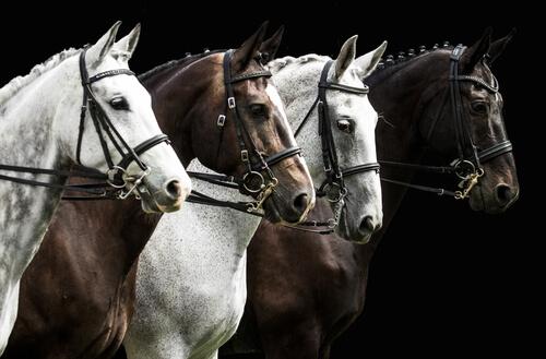 Ideas de nombres para caballos