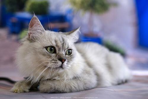 Curiosidades sobre las patas de los gatos