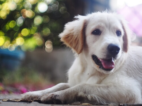 ¿Sabías que los perros sudan a través de sus patas?