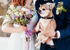 Perro en una boda