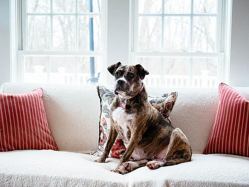 Origen del perro doméstico