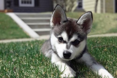 Un perro peluche, ¿no es adorable?