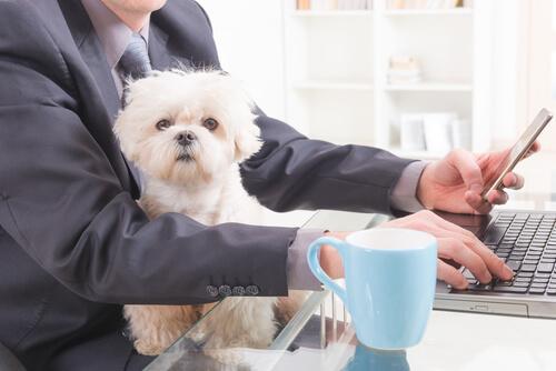 Los perros en el trabajo, maravillosa compañía