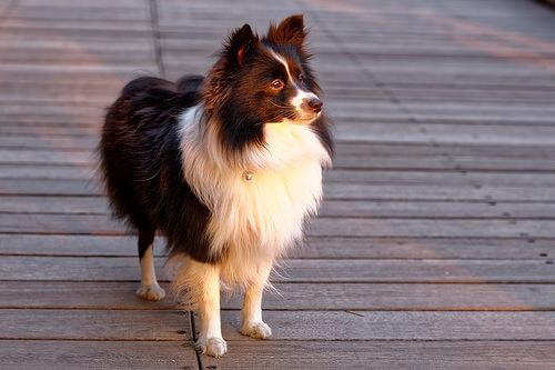 ¿Cuál es la personalidad del perro?