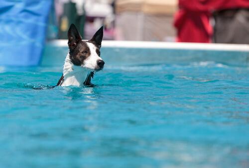 ¿Hay piscinas para perros?