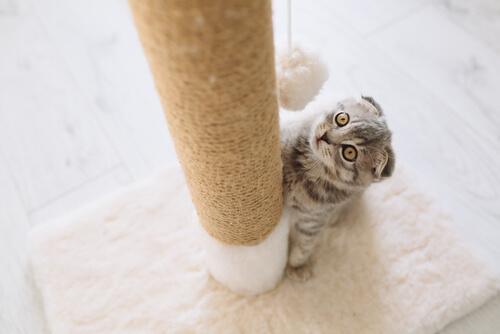 Postes rascadores para gatos