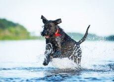 Perro saltando en la playa