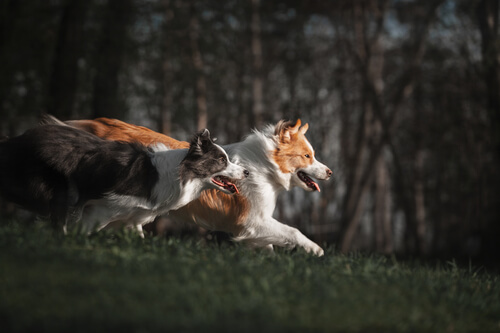 4 métodos de entrenamiento de pastoreo
