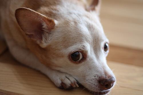 ¿Hay test de alergia para perros?