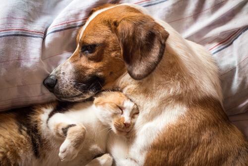 El tratamiento de la diarrea en perros y gatos