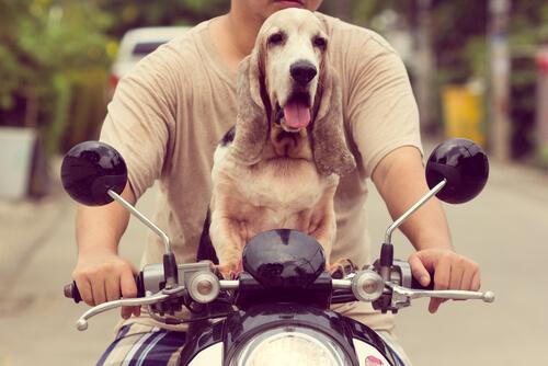 Viajar en moto con tu perro