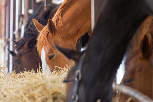 La alimentación de tu caballo, ¿qué le debes dar?