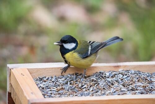 Los alimentos venenosos para aves