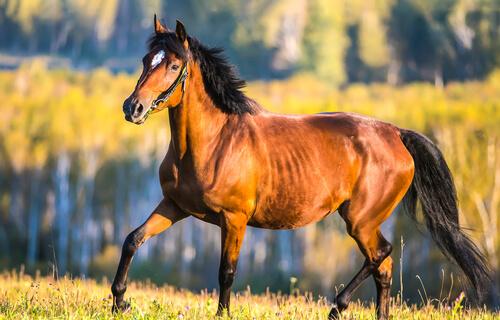 Buena salud en tu caballo