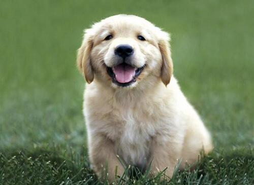 ¿Se puede cambiar el olor de un perro?