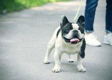 Perro paseando con correa