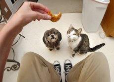 Perro y gato mirando la comida