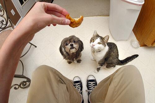 ¿Es diferente lo que comen gatos y perros?