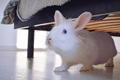 Conejo debajo de la cama