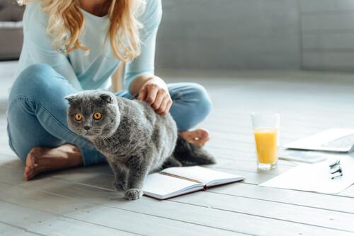 Gato en casa con su dueña