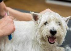 Cuidados del pelaje en el perro