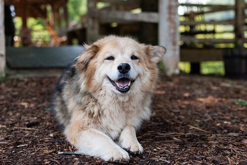 Displasia de cadera en perros: qué es y cómo se trata