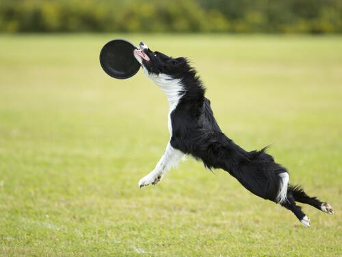 Juegos en el parque: el Disc Dog