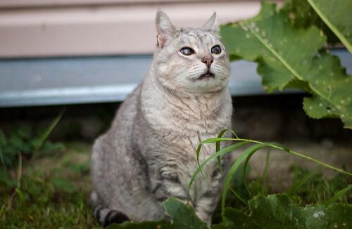 Enfermedades de gatos mayores