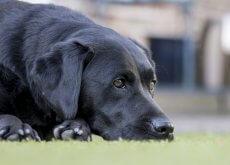 Enfermedades del perro anciano