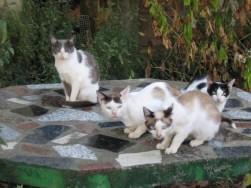 Guía para entender a los gatos