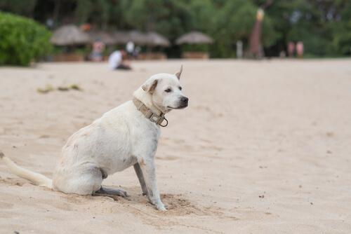 La epilepsia en perros