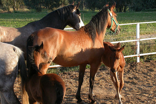 ¿Cómo acondicionar el espacio para tu caballo?