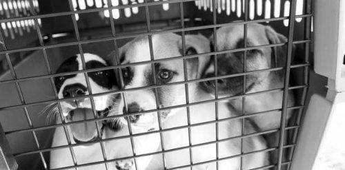Hay esperanza de vida para estos perros abandonados