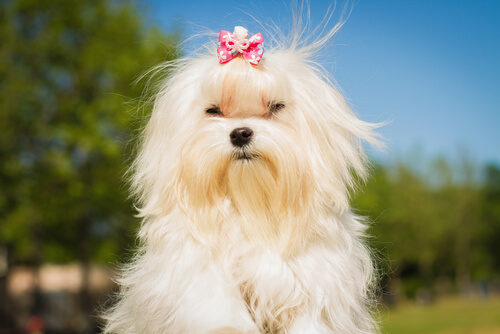 Las razas de perro más elegidas por los famosos