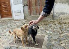Ganar la confianza de tu perro