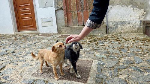 6 tips para ganar la confianza de tu perro