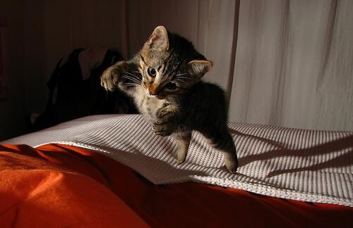 Los gatos sobreviven a caídas