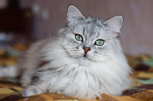 ¿Por qué los gatos tienen mala fama?