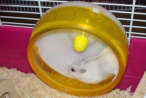 Hamster en una rueda