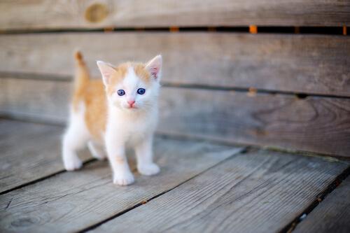 Los cuidados de un gato neonato huérfano