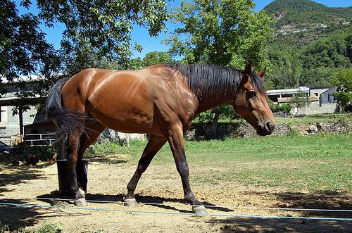 El herrado de un caballo sin riesgos