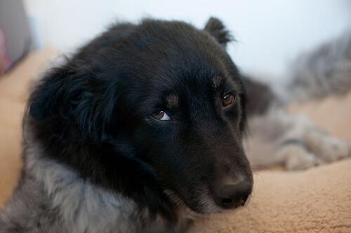 ¿Qué es la ehrliquiosis canina?